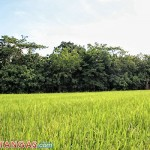 the peat forest in lobo batangas