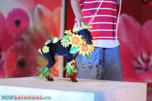 Pets in Flower Costume at SM City Batangas (35)