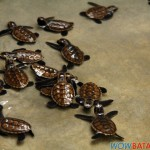 hawkbill sea turtles