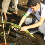 tree planting at Calumpang River