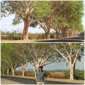 Rubber Trees of Brgy. Gulod, Calatagan, Batangas